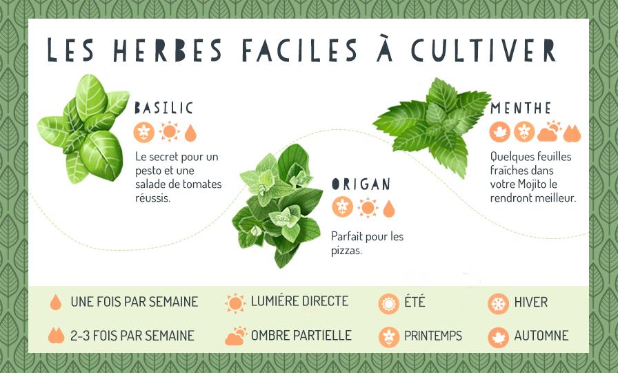 Herbes faciles