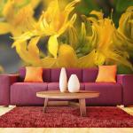 Papier Peint | Close Up Of Yellow Azalea | 350x270 | -