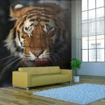 Papier peint - Tigre de Sibérie - 200x154 - -