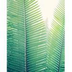 Poster Jungle en papier 40 x 50 cm