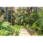 Scenolia Papier Peint Intissé Jardin Tropical Végétation Barcelone 4 x 2,70m - Décoration Effet Trompe l'Oeil - Revêtement Panoramique Mural - Pose Facile et Qualité HD