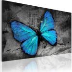 Tableau toile de décoration motif Etude d'un papillon 120x80cm DEC110598